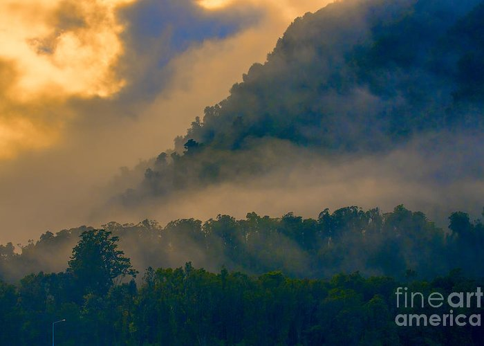 Trees Greeting Card featuring the photograph Mist amongst trees by Sheila Smart Fine Art Photography