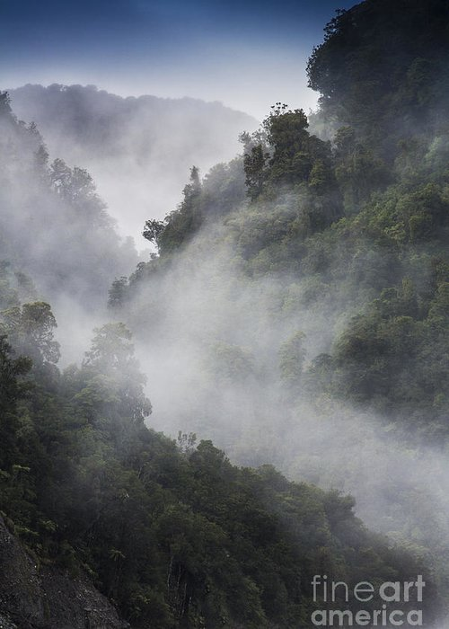 Misty Greeting Card featuring the photograph Mist in trees at Franz Josef glacier by Sheila Smart Fine Art Photography