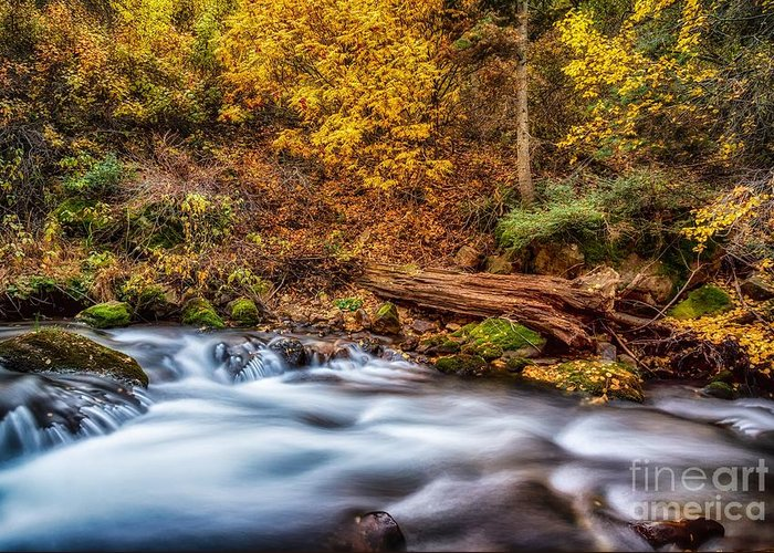 River Greeting Card featuring the photograph Mist Of Colors by Mitch Johanson