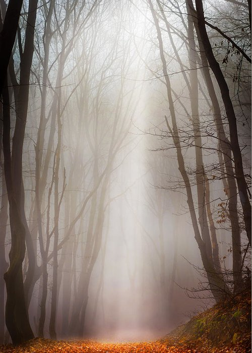 Forest Greeting Card featuring the photograph Misty Forest by Dobromir Dobrinov