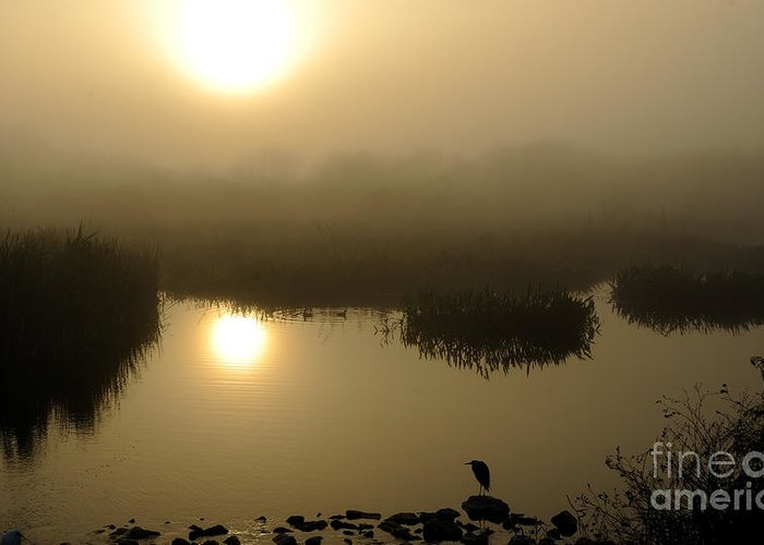 Marsh Greeting Card featuring the photograph Misty Morning In The Marsh by Nancy Greenland