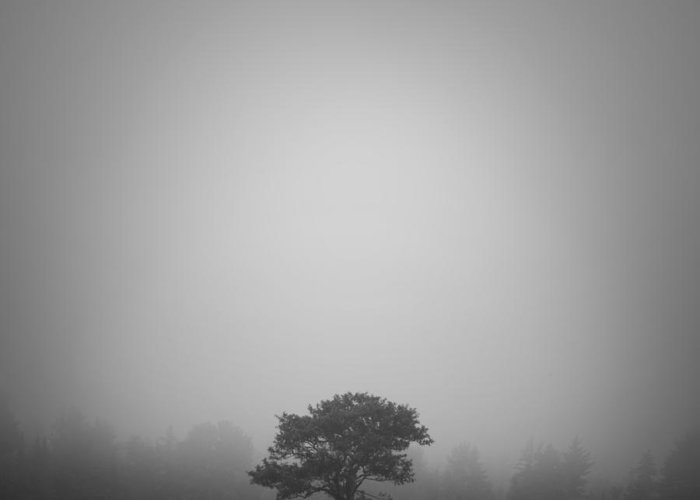 Maine Greeting Card featuring the photograph Misty Morning by Patrick Downey