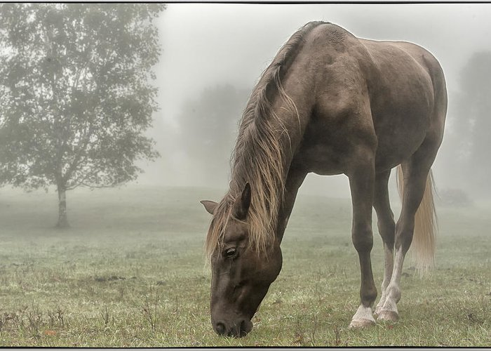 Rocky Mountain Horse Greeting Card featuring the photograph Misty Morning by Peter Lindsay