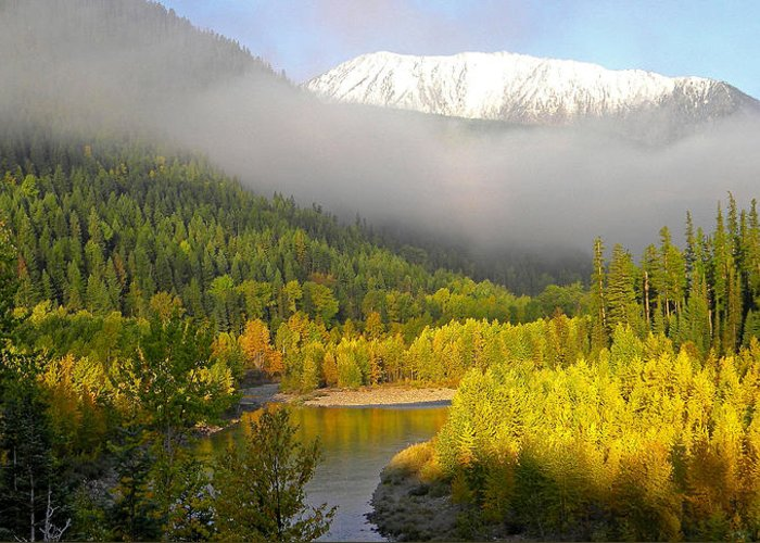 Rivers Greeting Card featuring the photograph Misty Morning by Scott T Campbell