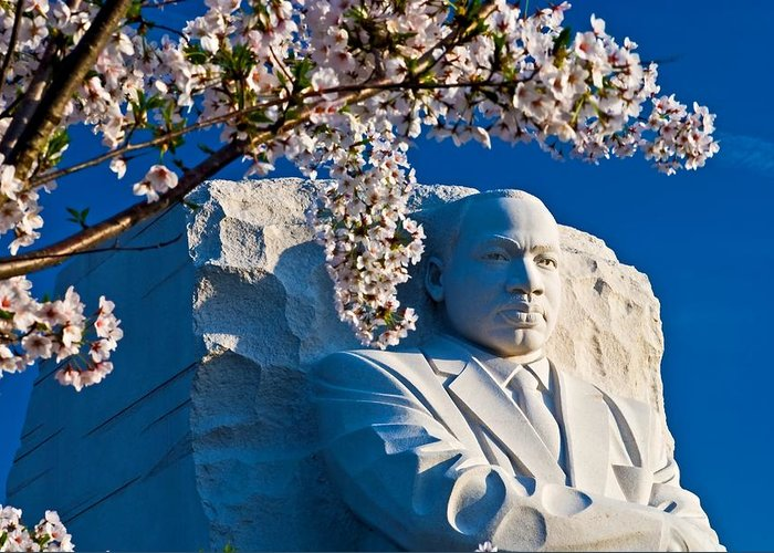 Spring Greeting Card featuring the photograph Mlk Memorial Framed By Cherry Blossoms by Bill Jonscher