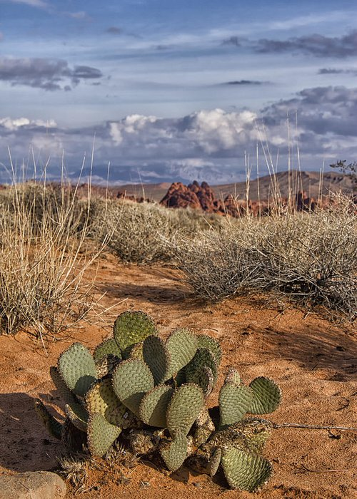 Cactus Greeting Card featuring the photograph Mojave Desert Cactus by Debby Richards