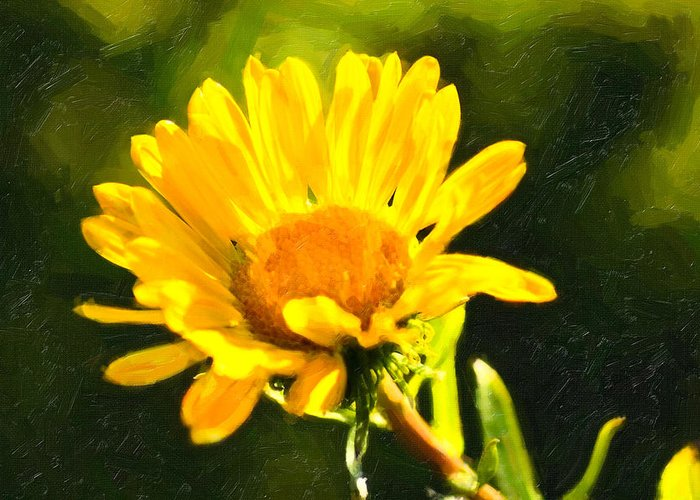 Sunny Greeting Card featuring the photograph Moment In The Sun - Golden Flower - Northern California by Mark E Tisdale