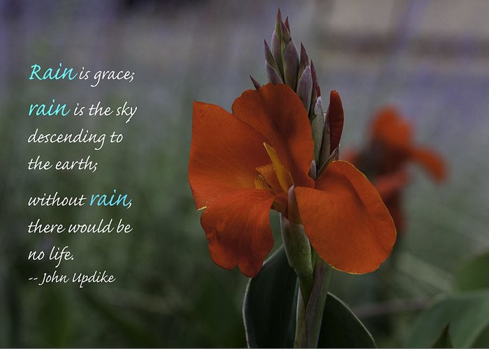 Nature Greeting Card featuring the photograph Monday Motivation - Red Canna by Martha Burger