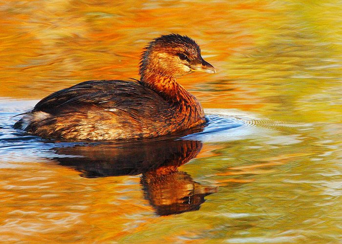Pied-billed Grebe Greeting Card featuring the photograph Monet Grebe by Andrew McInnes
