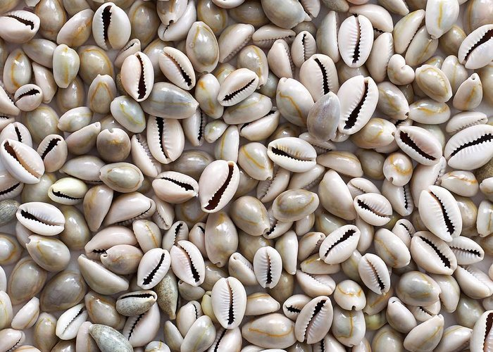 Cowry Greeting Cards