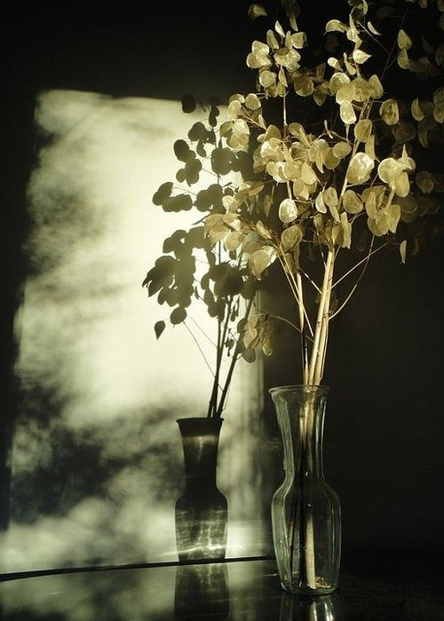 Guy Ricketts Photography Greeting Card featuring the photograph Money Plants Really Do Cast Shadows by Guy Ricketts