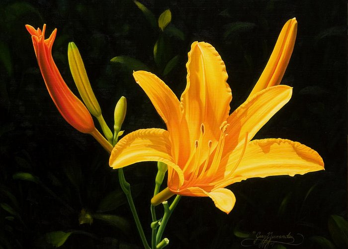 Floral Greeting Card featuring the painting Monikas Lily by Gary Hernandez