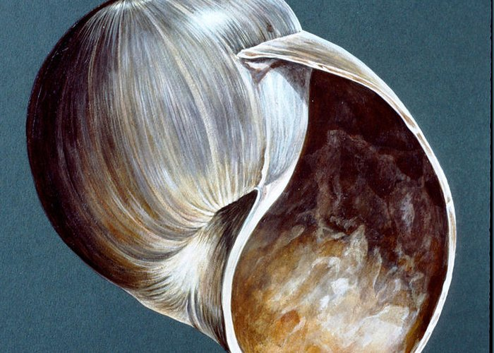 Shell Greeting Card featuring the painting Monnsnail by Richard Ellis
