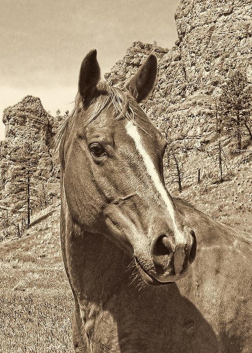 Horse Greeting Card featuring the photograph Montana Horse Portrait In Sepia by Jennie Marie Schell