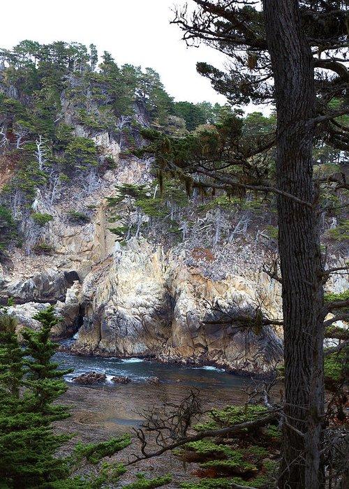 Montereyrock Pines And Cypress Greeting Card featuring the photograph Monterey Rock Pines And Cypress by Viktor Savchenko