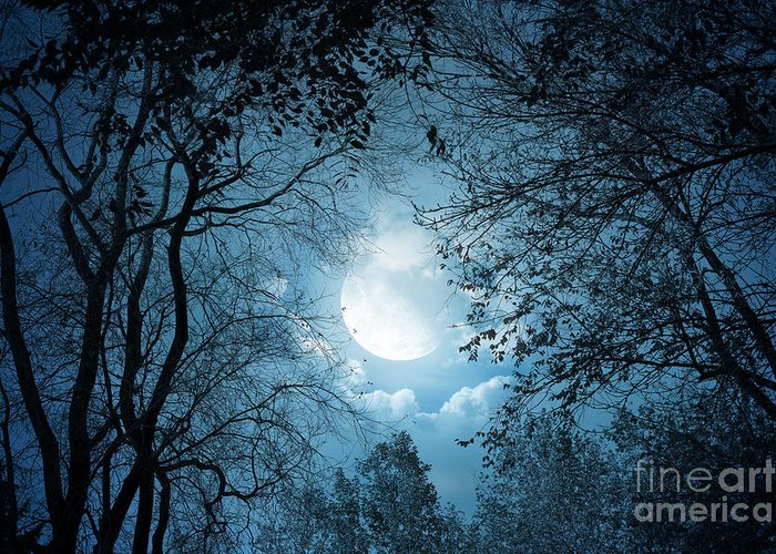 Moonlight Greeting Card featuring the photograph Moonlight With Forest by Boon Mee