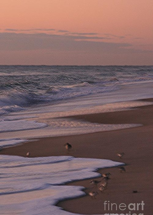 Beach Greeting Card featuring the photograph Morning Birds At The Beach by Nadine Rippelmeyer
