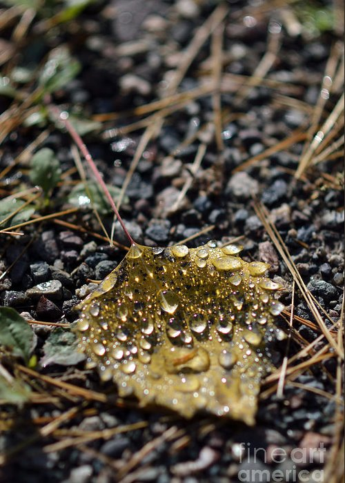 Wet Greeting Card featuring the photograph Morning Dew On Autumn Leaf by Birgit Tyrrell