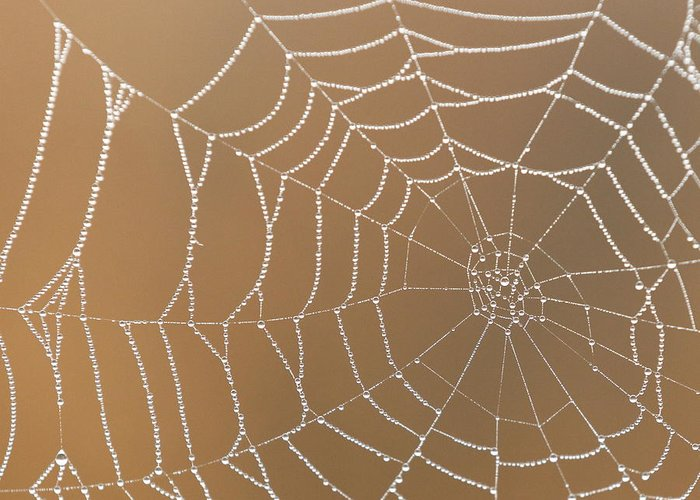 Cobweb Greeting Card featuring the photograph Morning Dew On Web by April Copeland