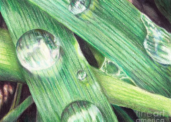 Dewdrops Drawings Greeting Cards