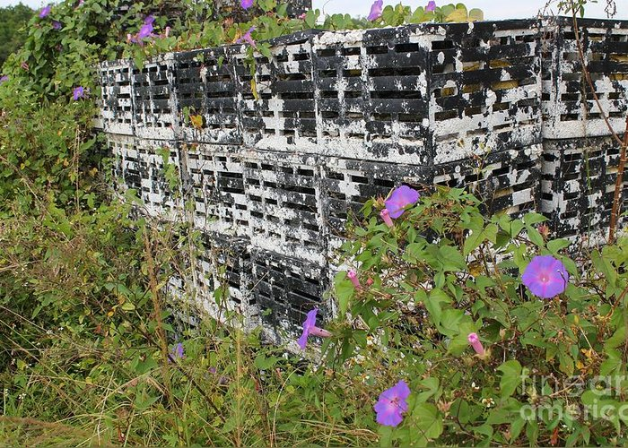 Morning Glories Greeting Card featuring the photograph Morning Glories And Crab Traps by Theresa Willingham