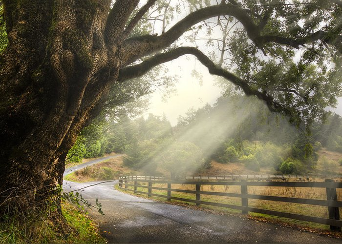 Clouds Greeting Card featuring the photograph Morning Light by Debra and Dave Vanderlaan