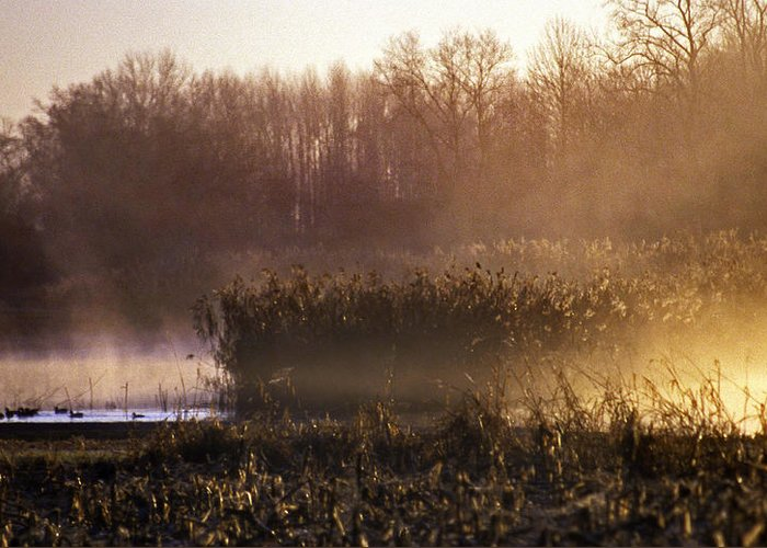 Nature Greeting Card featuring the photograph Morning Light by Skip Willits