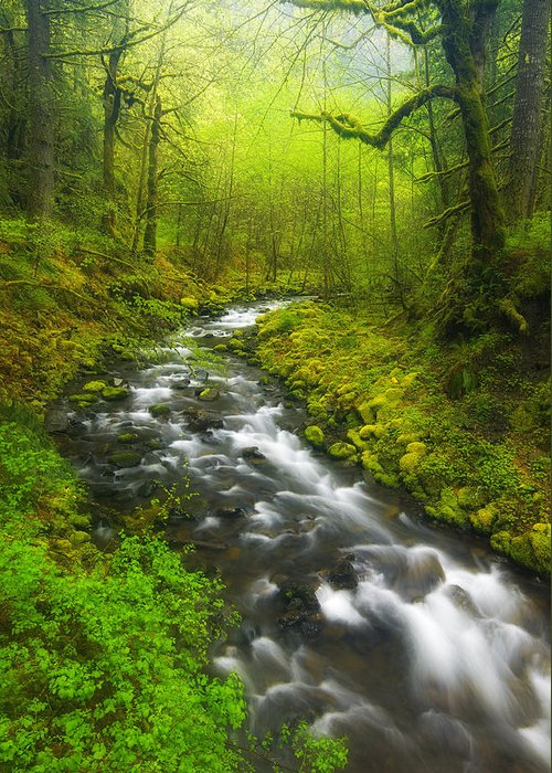 Lush Greeting Card featuring the photograph Morning Misty Creek by Darren White