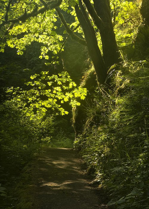 Path Greeting Card featuring the photograph Morning Path by Andrew Soundarajan