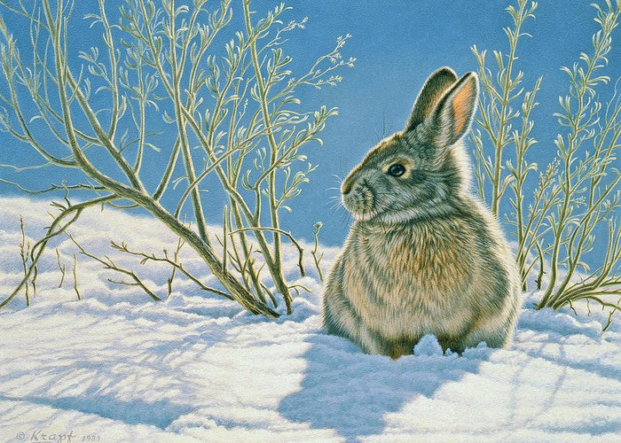 Cottontail Greeting Cards