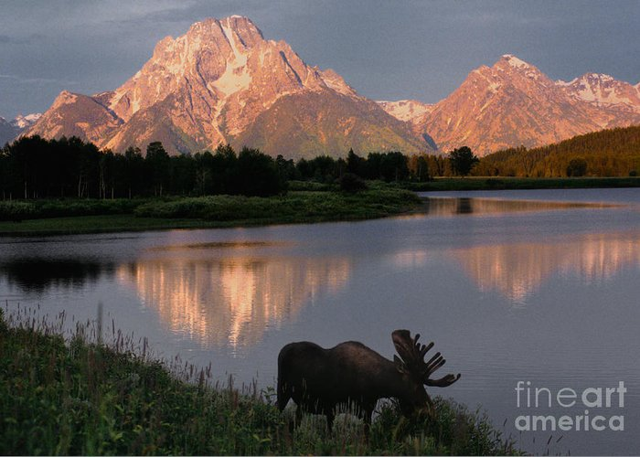 Grand Teton Greeting Card featuring the photograph Morning Tranquility by Sandra Bronstein