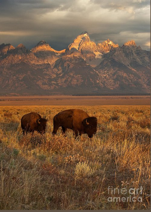 Grand Teton Greeting Card featuring the photograph Morning Travels in Grand Teton by Sandra Bronstein