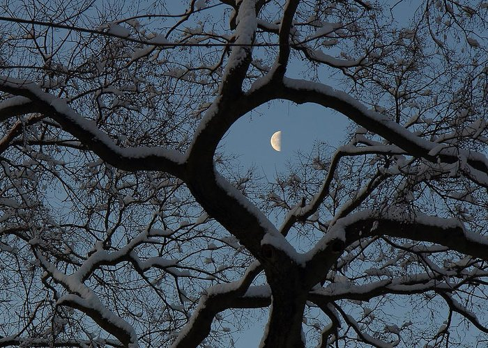Tower Grove Greeting Card featuring the photograph Morning Twilight by Scott Rackers