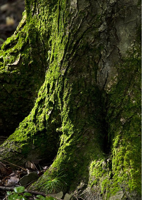 Moss Greeting Card featuring the photograph Moss Covered Tree Trunk by Christina Rollo
