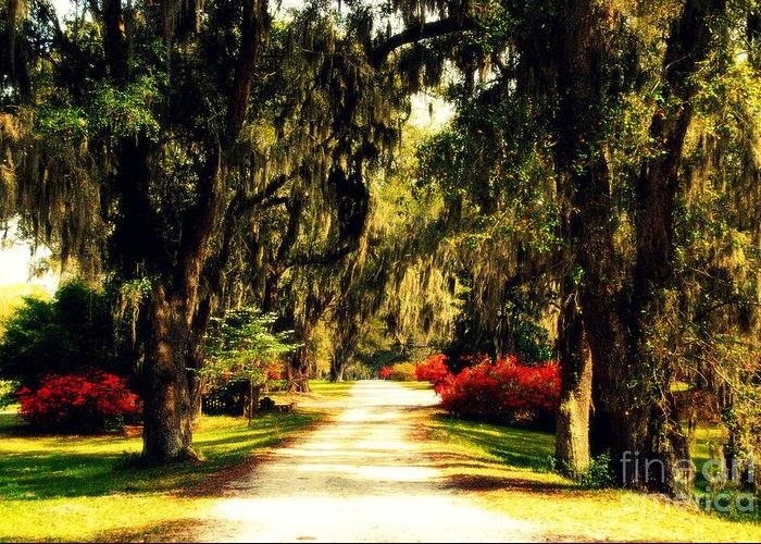 Moss On The Trees Greeting Card featuring the photograph Moss On The Trees At Monks Corner In Charleston by Susanne Van Hulst