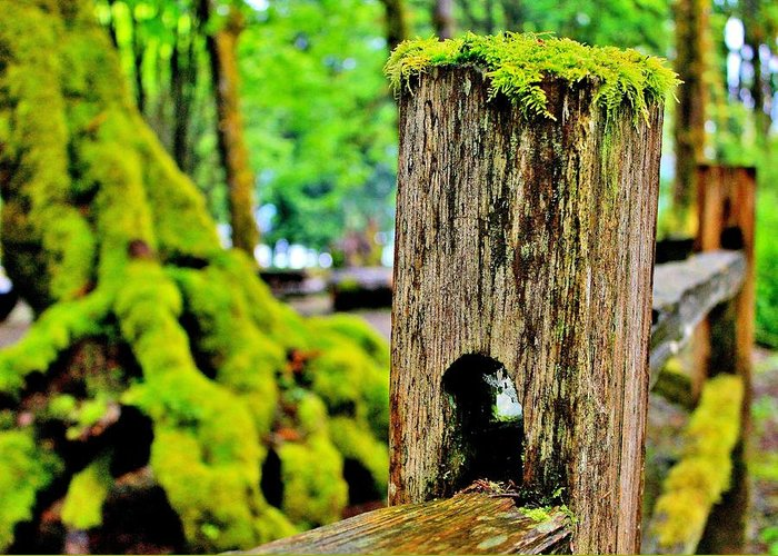 Moss Greeting Card featuring the photograph Mosspost by Benjamin Yeager