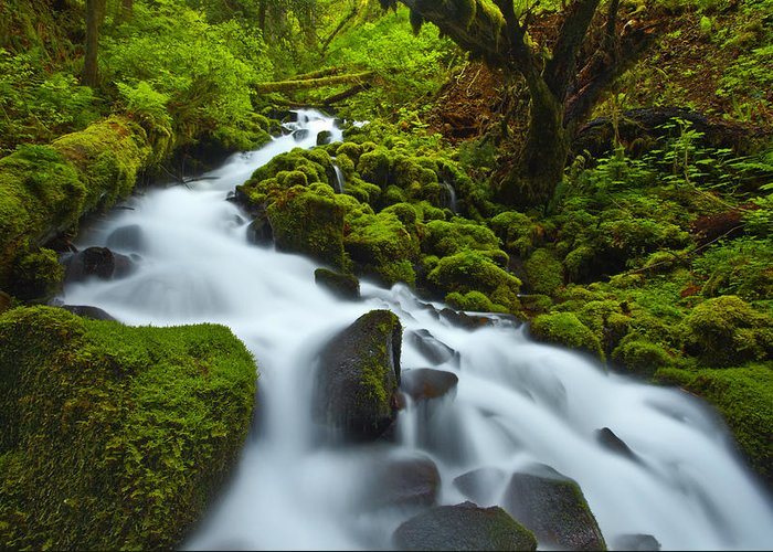 Lush Greeting Card featuring the photograph Mossy Creek Cascade by Darren White