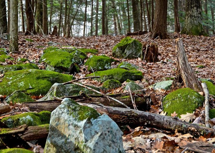 Pennsylvania Greeting Card featuring the photograph Mossy Rocks by Jake Donaldson