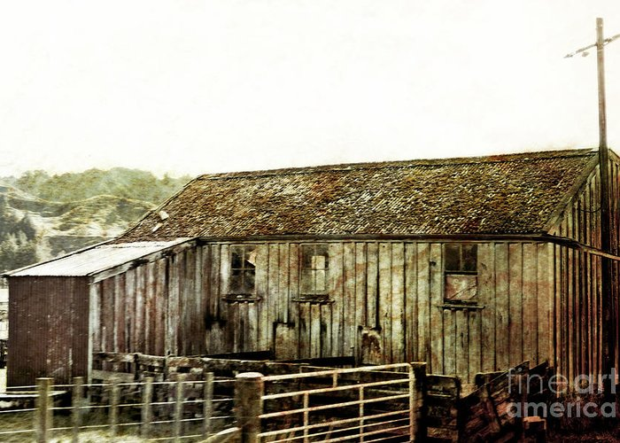 Old Shed Greeting Card featuring the photograph Mossy Shed by Linde Townsend