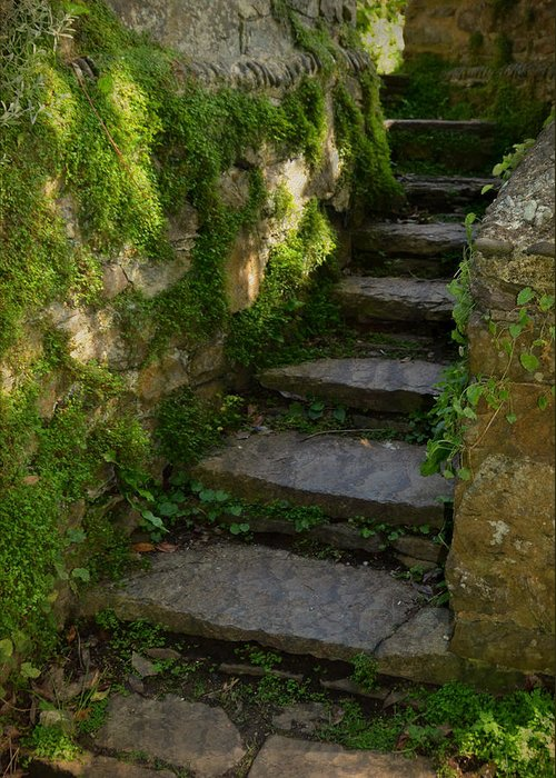 Step Greeting Card featuring the photograph Mossy Steps by Carla Parris