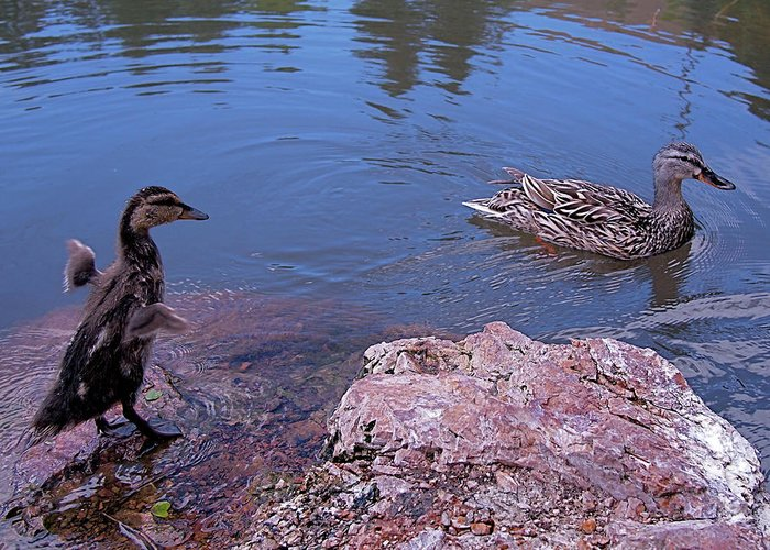 Mallard Greeting Card featuring the photograph Mother And Child by Rona Black