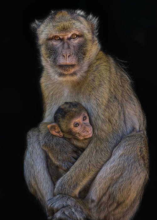 Animals Greeting Card featuring the photograph Motherly Love by Joachim G Pinkawa