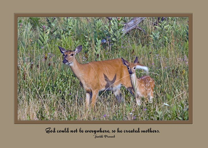 Deer Greeting Card featuring the photograph Mothersday01 by Helen Ellis