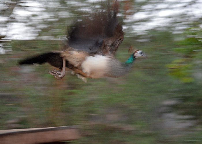Bird Greeting Card featuring the photograph Motion In Air by Mahendra Mithapara