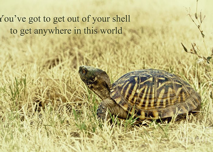 Animal Greeting Card featuring the photograph Motivating A Turtle by Robert Frederick