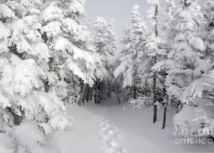 Wilderness Greeting Card featuring the photograph Mount Osceola Trail - White Mountains New Hampshire by Erin Paul Donovan