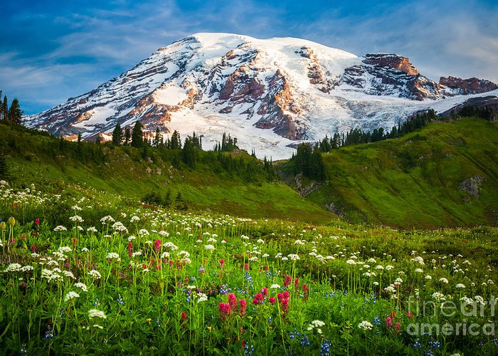 America Greeting Card featuring the photograph Mount Rainier Flower Meadow by Inge Johnsson