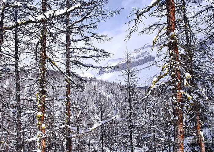 Tree Greeting Card featuring the photograph Mountain Landscape by Elena Elisseeva