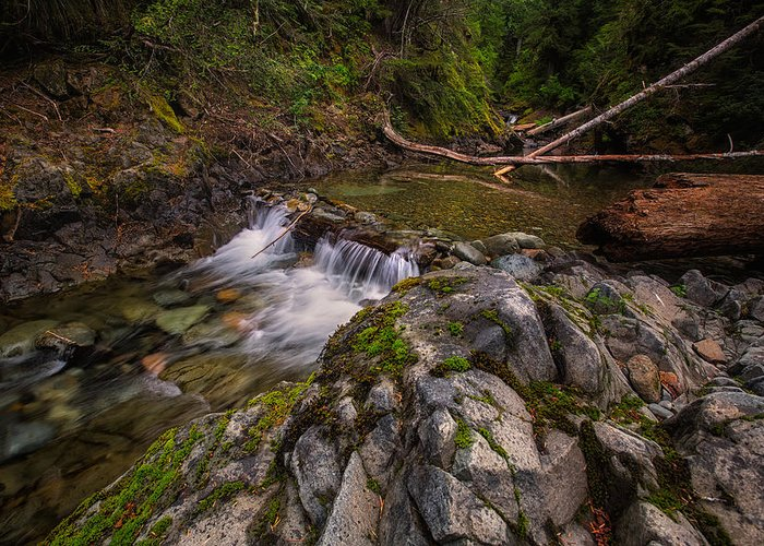 Mount Rainier Greeting Card featuring the photograph Mountain Stream by Kevin Clifford