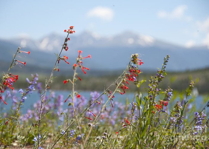 Botanic Greeting Card featuring the photograph Mountain Wildflowers by Juli Scalzi